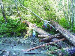 Skagit Fisheries Enhancement Group members secure logs. Photo