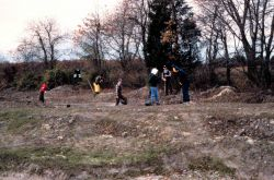 Volunteers along the tree margin work to stabilize and replant the remnant side of the former ditch. Photo