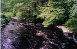 A view of Parker River looking downstream of the restoration site before restoration. Photo