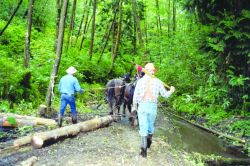 Two men drive their horses into the stream to drop wood off at the restoration staging site. Photo