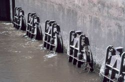 A close-up view of the tide gate from the Delaware River side shows the flat valves near low tide Photo