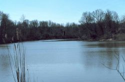 Army Creek Pond a freshwater pond about 1 mile upstream from the tide gate/water control structure Photo