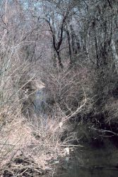 A close-up view of the scrub under-brush common along Army Creek. Photo