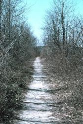 The path that leads to the tide gate at Army Creek. Photo