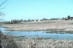 Gambacorta Creek, the Gambacorta landfill cap is about mid-photo where the land slopes in the background between the white house and the large structu Photo