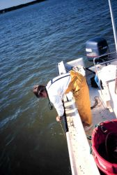 Trish Murphy, formerly of NOAA, takes a secchi depth reading to determine water turbidity and how it relates to the ability of the fish to recognize t Photo