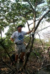 Scott Gudes uses a long handled boat hook to remove monofilament from the upper branches of mangroves where birds roost and may become entangled. Photo