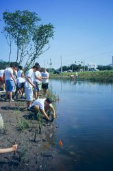 Volunteers plant at the water's edge out to the flags. Photo