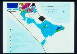A schematic that shows the restricted side of the marsh at Sachuest Point. Image