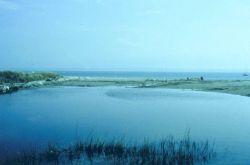 A main tidal creek. Image