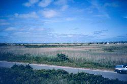 A Phragmites dominated area of Sachuest Marsh, pre restoration. Image