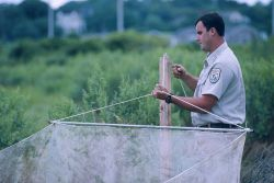 A US Fish and Wildlife volunteer assists with the lift nets Image