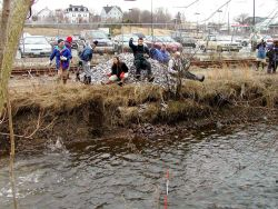 Cobble habitat is tossed into North River to replace storm water sediments on the river bottom. Photo