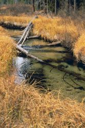 An image showing the healthy riparian habitat Image