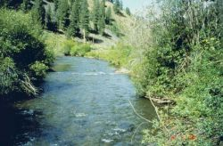 An image of the middle section of Panther Creek. Photo