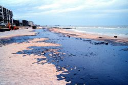 An oiled beach north of Blind Pass, Treasure Island Image