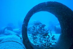 School of Mulloidichthys samoensis (Weke) in large concrete pipe Photo