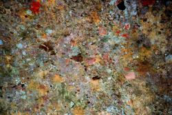 Broyozoa, oysters, sponges on interior roof of concrete pipe Photo