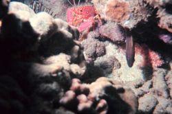Crab and damselfish Photo