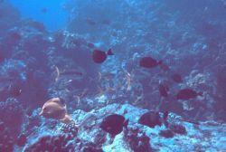 An array of various reef fish Image