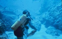 A scuba diver on a Hawaiian reef Image
