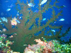 Soft corals. Photo