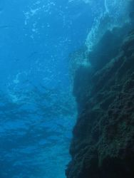 Shallow vertical reef face at French Frigate Shoals. Photo