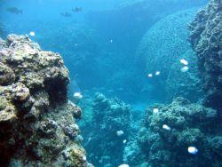 A reef scene. Image