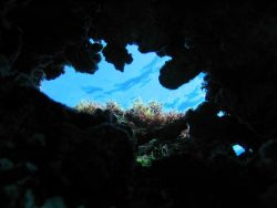 View towards surface from below large coral growths. Photo