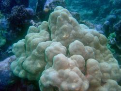 Coral Photo