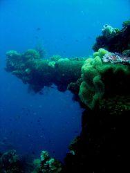 Coral encrusted gun on Fujikawa Maru. Photo