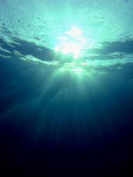 Looking towards the surface. Photo