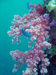Soft coral on Hanakawa Maru. Photo