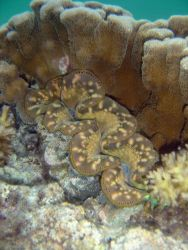 Well-camouflaged scorpionfish (Sp Photo