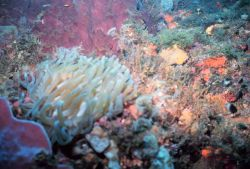 A reef scene with a large anemone in the left foreground Photo
