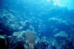 A reef scene Photo