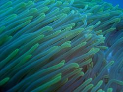Sea anemone. Photo