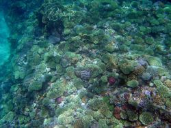 Reef scene. Photo