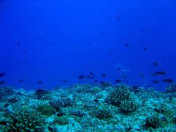 Reef scene with surgeon fish and parrot fish Photo