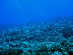 Reef scene with scuba divers in the distance Photo