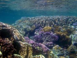 Shallow reef baring at low tide Photo