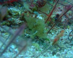 Frogfish? Photo
