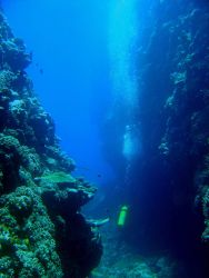 Diver between vertical walls on coral reef with shark cruising in the distance. Photo