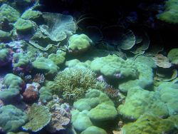 A beautiful patch of various coral species. Photo