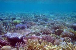 Reef scene Photo