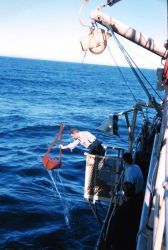 Deploying a Van Vehn grab sampler from the Bureau of Commercial Fisheries Ship BROWN BEAR. Photo