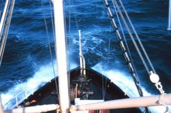 The bow of the Bureau of Commercial Fisheries Ship BROWN BEAR. Photo