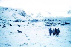 Weddell seals at old British Base T at Cape Geddes Photo