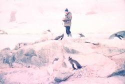 Among the penguins at Port Lockroy Photo