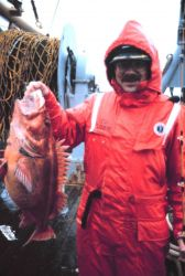 Rockfish caught off Biorka Island, Sitka Sound Photo